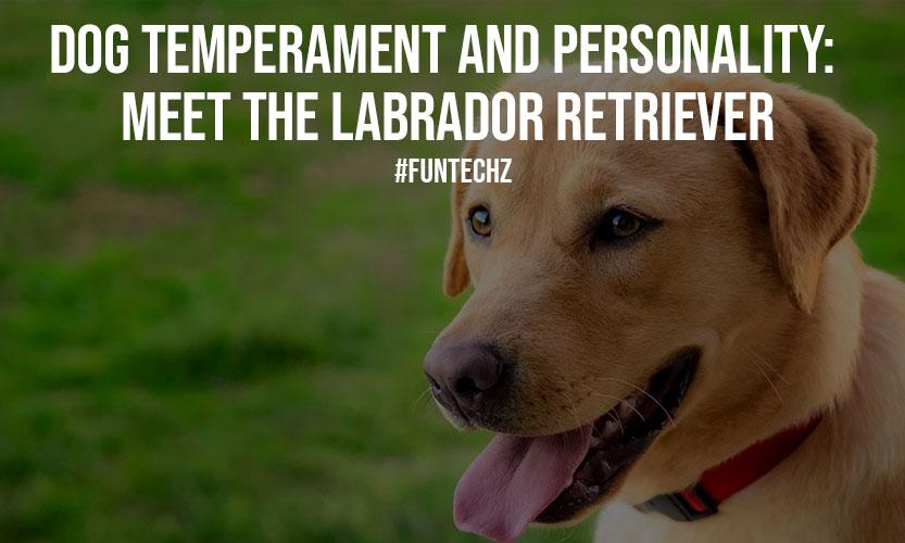 Dog Temperament and Personality Meet The Labrador Retriever